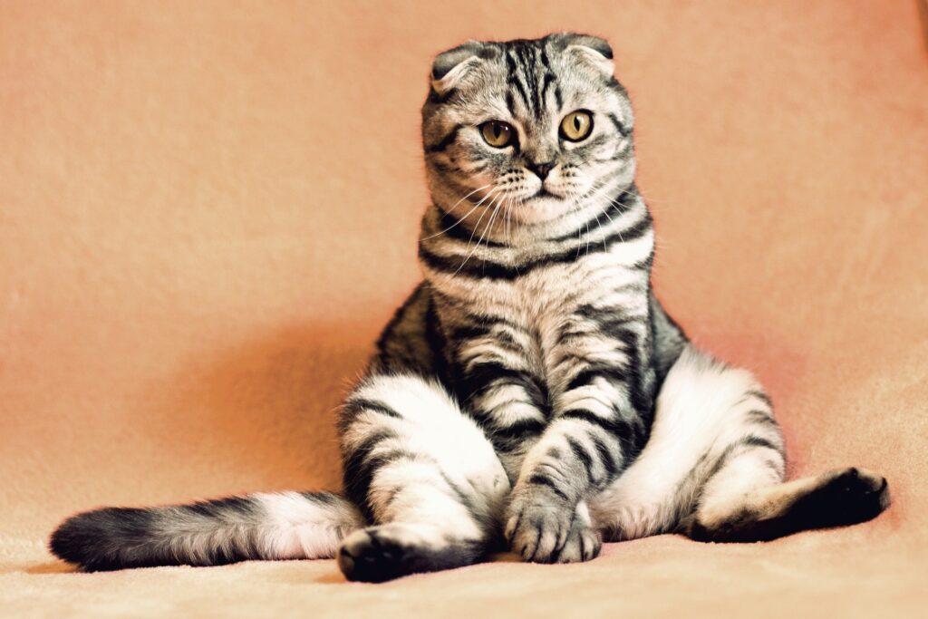 斬新すぎる猫の夢占い