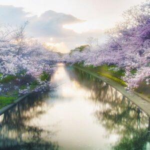 恋愛・復縁のおまじないー川や池に自然に散った